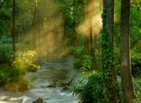PHOTOPAD SUNBEAM WATER FOREST