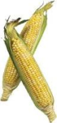 TRANSPARENT CORNGIMP