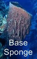BASE SPONGE